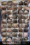 Barber Hairstyle Detail Poster for African-American Men